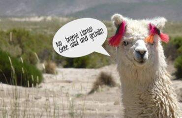 No Drama Llama!